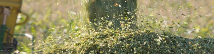 NOTAS TÉCNICAS MILHO ENSILADO: A qualidade e o momento ótimo da colheita